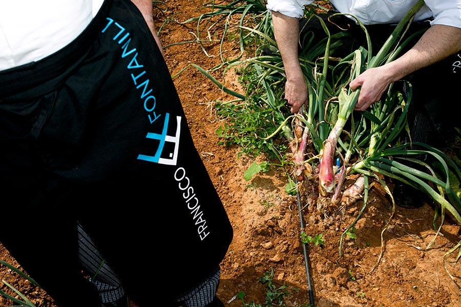 Personal de Francisco La Fontanilla recolectando las cebollas frescas de su huerto