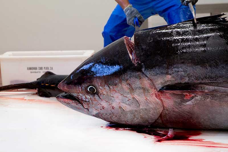 cabeza de atún