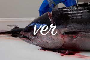 cabeza de atun