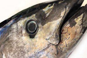 foto de atún rojo