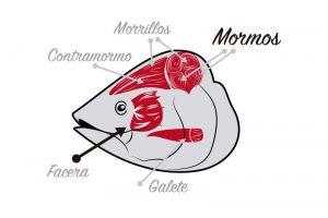 despiece de la cabeza del atún rojo
