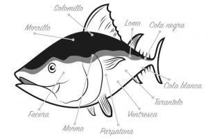 ronqueo del atún rojo
