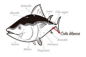 Despiece del atún rojo