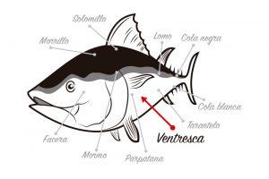 Localización de la ventresca del atún rojo
