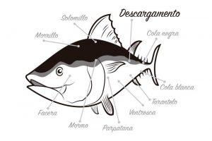 Descargamento del atún rojo